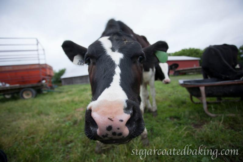 Centuryholm Farm - Milk Cake