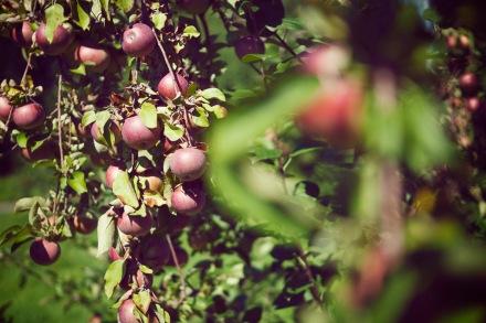 Mountain Orchard Farm